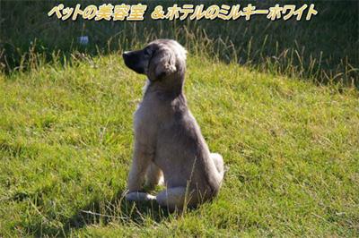 草原に佇む中型犬
