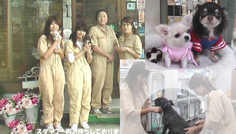 犬を抱っこする4名の公認トリマー