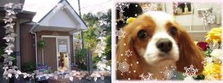 三角の屋根の一軒家と看板犬のキャバリア