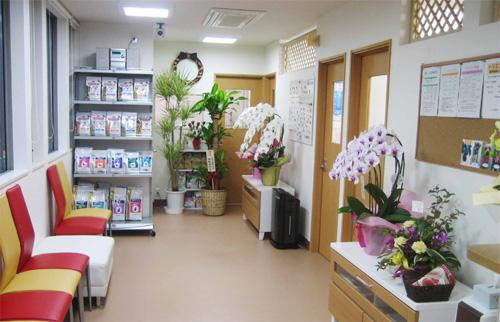 胡蝶蘭が飾られた待合室