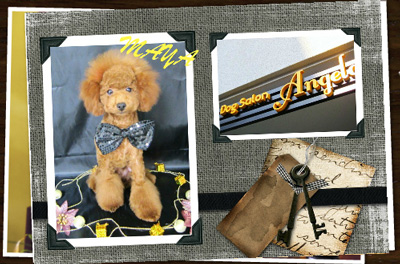 ライオンカットのトイプードルとお店の看板