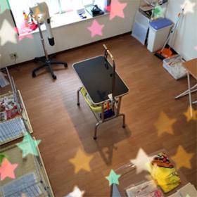 広い部屋に置かれたトリミングテーブル