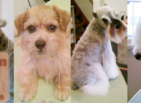 いろんな犬種のカット写真