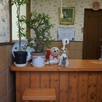 観葉植物が置かれたお店カウンター