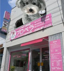ピンクの看板と料金表