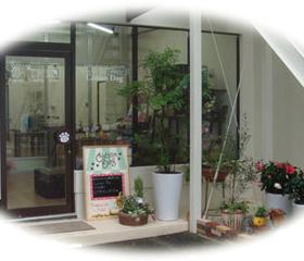 観葉植物やお花がたくさん並んだ店舗玄関