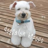 にっこり笑う犬