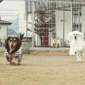 全力でドッグランを走る犬たち