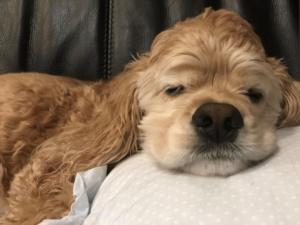 気持ちよさそうに眠るアメコカ