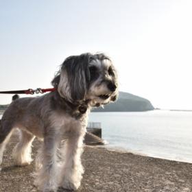 海岸で海を見つめるシュナ