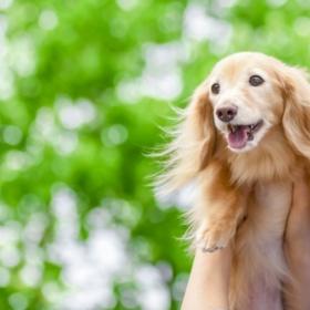 ダックスの爽やかな笑顔