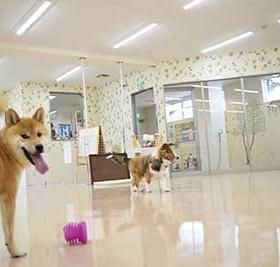 広い店内で遊ぶ犬