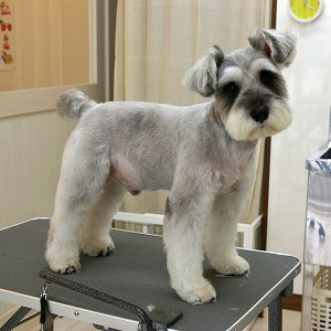 how to cut a dogs hair that wont sit still